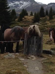 04_Alp Flix Pferde 1