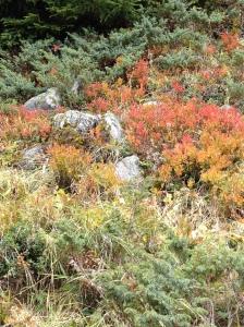 04_Herbstfarben Alp Flix