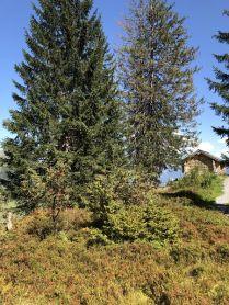 Höhenwanderung Oberblegisee
